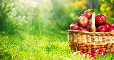 Fruit Trees: The Ones You Need To Grow