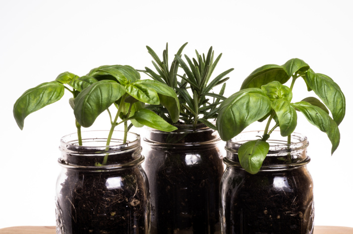 Mason Jars with Herbs