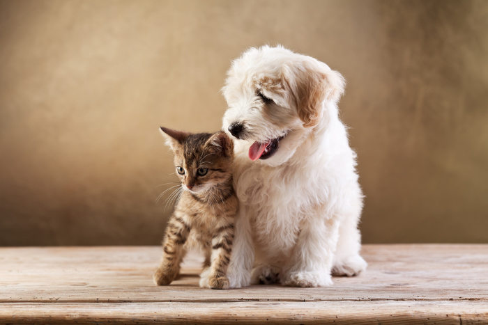 First Aid Kit Ideas For Your Pets