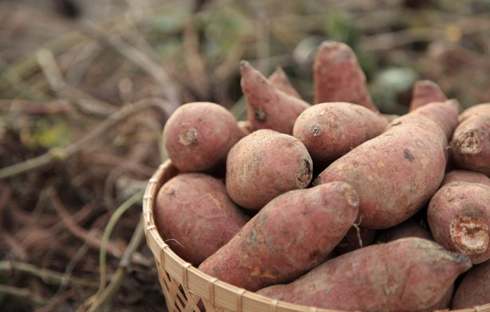 Sweet Potatoes: Everything You Need to Know