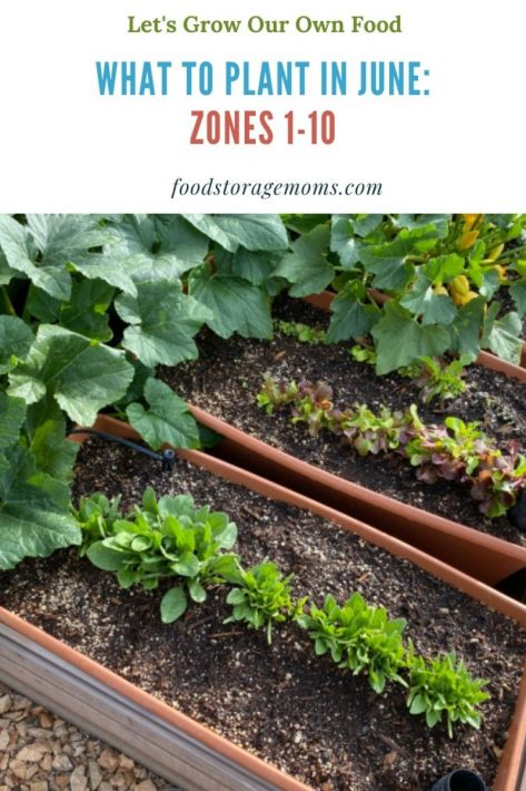 What To Plant In June-Zones 1-10