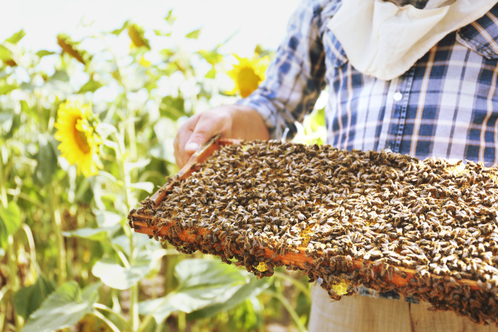 Honey Bees: Everything You Should Know