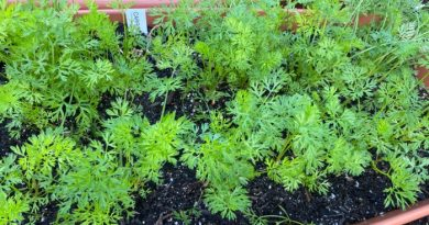 What To Plant In August-Zones 1-10