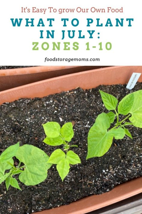 What To Plant In July-Zones 1-10