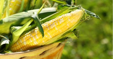 Is There a Corn Shortage? Iowa Derecho Damage