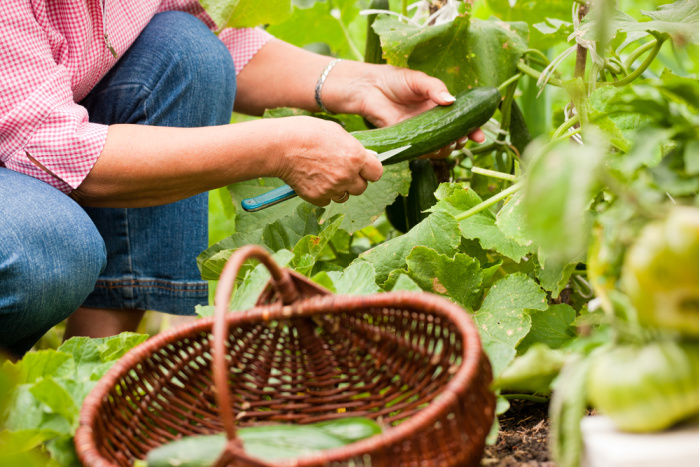What to Plant in a Victory Garden