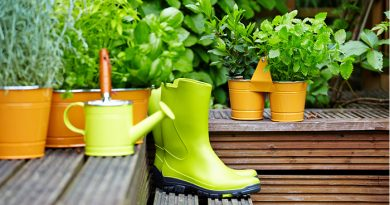 Use These 7 Top Household Items as a Fertilizer