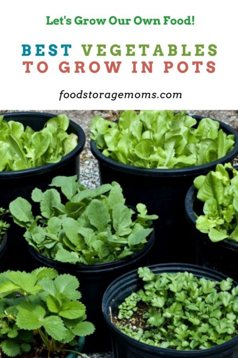 Best Vegetables to Grow in Pots
