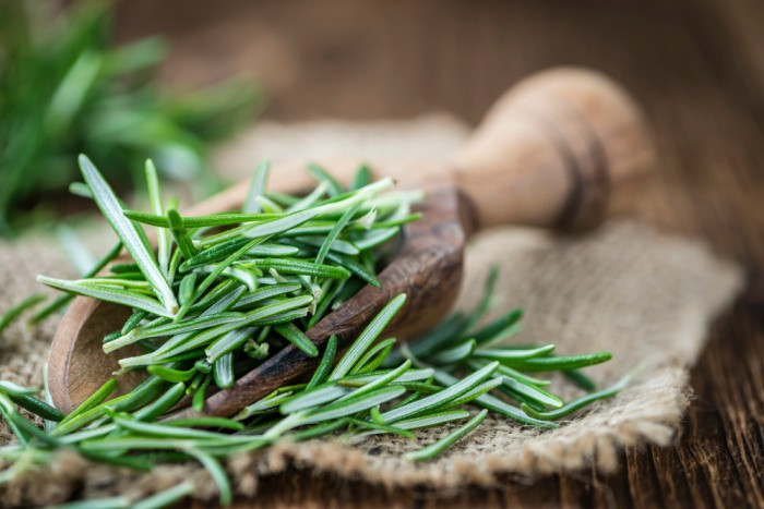 Rosemary Herbal Remedies Straight from the Garden