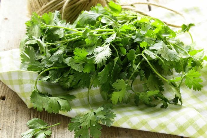 Cilantro herbal Remedies