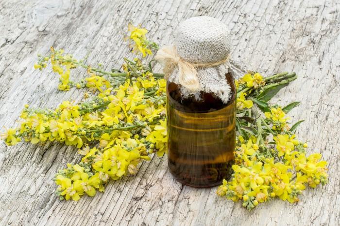 Mullein Herbal Remedies