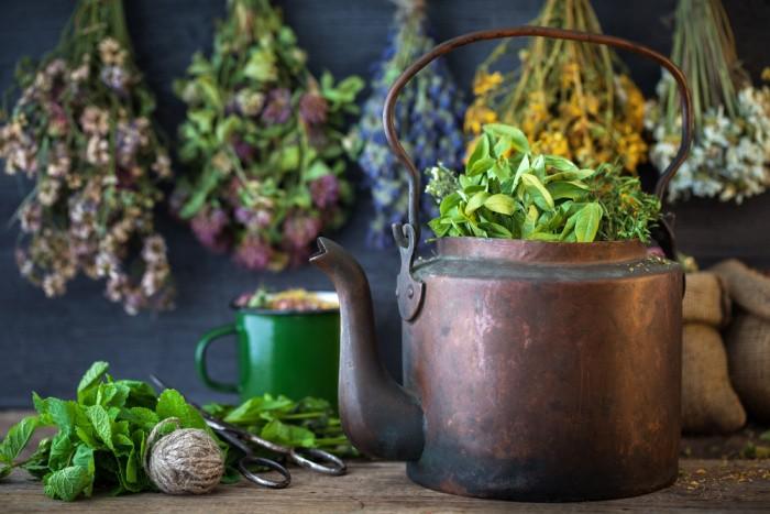 How to Grow Mint in Your Backyard