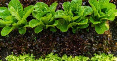 10 Tips to Improve Your Garden Soil
