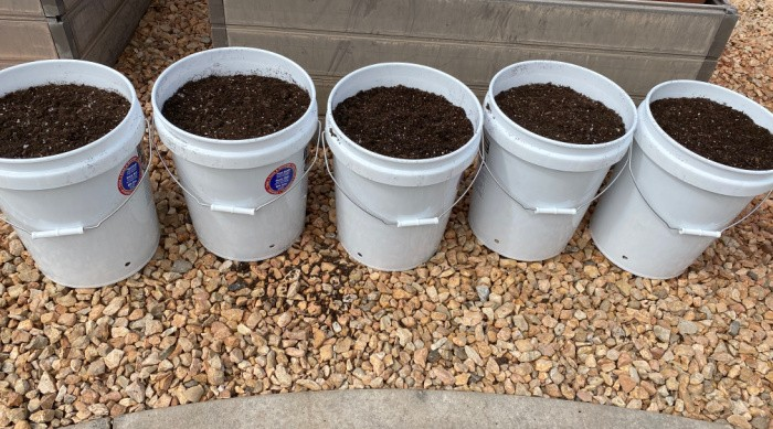 Buckets with Soil