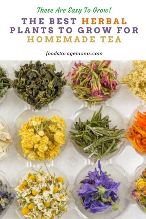 The Best Herbal Plants to Grow for Homemade Tea