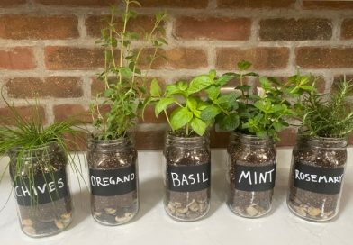 The Best Herbs To Grow In Mason Jars