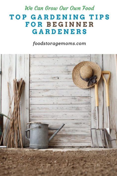 Top Gardening Tips for Beginner Gardeners