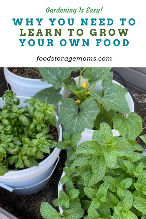 Why You Need to Learn to Grow Your Own Food