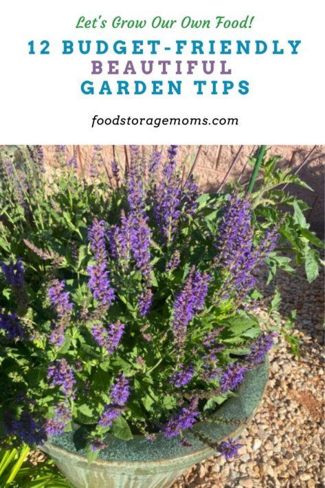 12 Budget-Friendly Beautiful Garden Tips