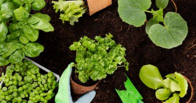 13 of the Best Gardening Tips Ever