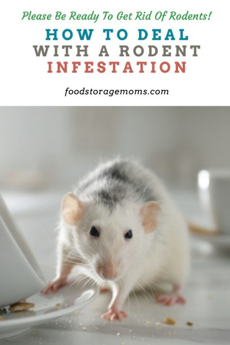 How to Deal with a Rodent Infestation