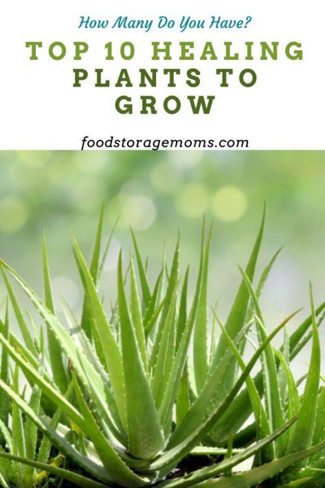 Top 10 Healing Plants to Grow