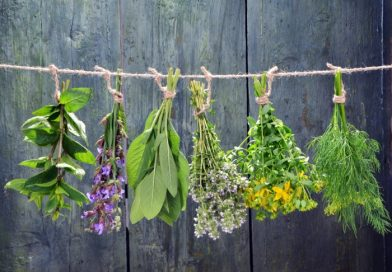 Top Herbs that Work Great for Healing