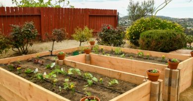 What is Keyhole Gardening?