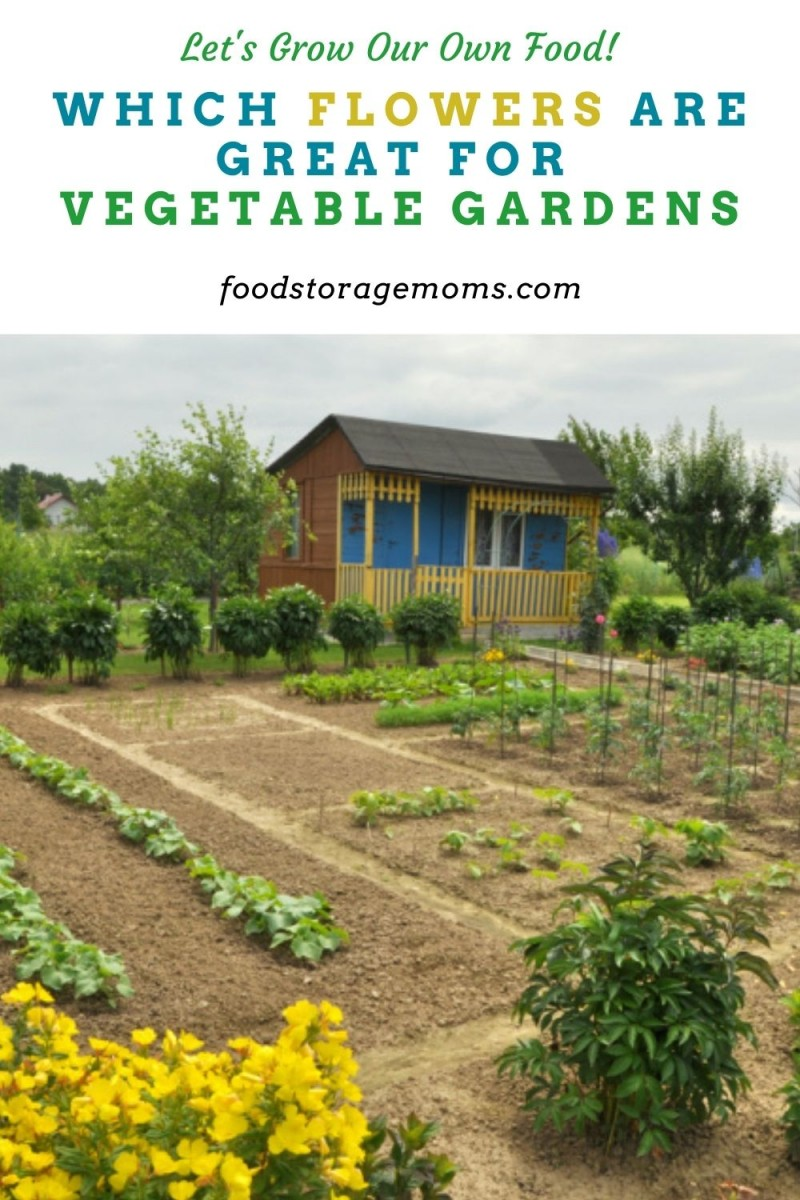 Which Flowers are Great for Vegetable Gardens