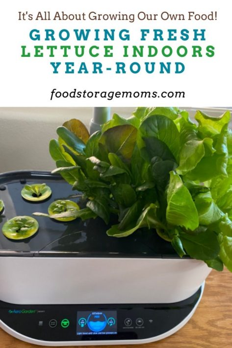 Growing Fresh Lettuce Indoors Year-Round