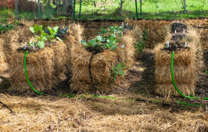 What is Core Gardening?