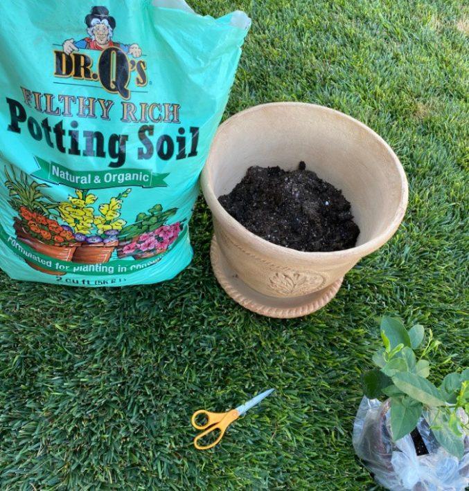 Dr Q Potting Soil