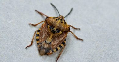 Stink Bugs: What You May Not Know