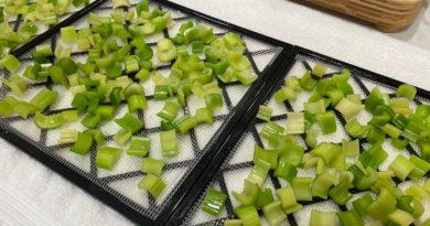 How To Dehydrate Celery + Celery Powder