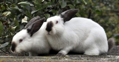 How to Use Rabbit Poop Fertilizer