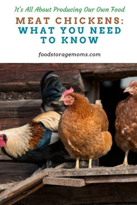 Pollos de carne: lo que necesita saber