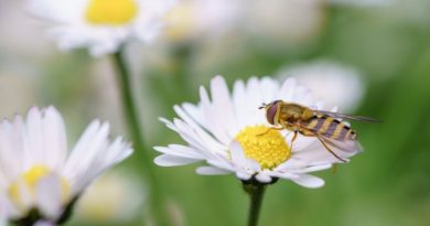 Wasps: What You Need to Know